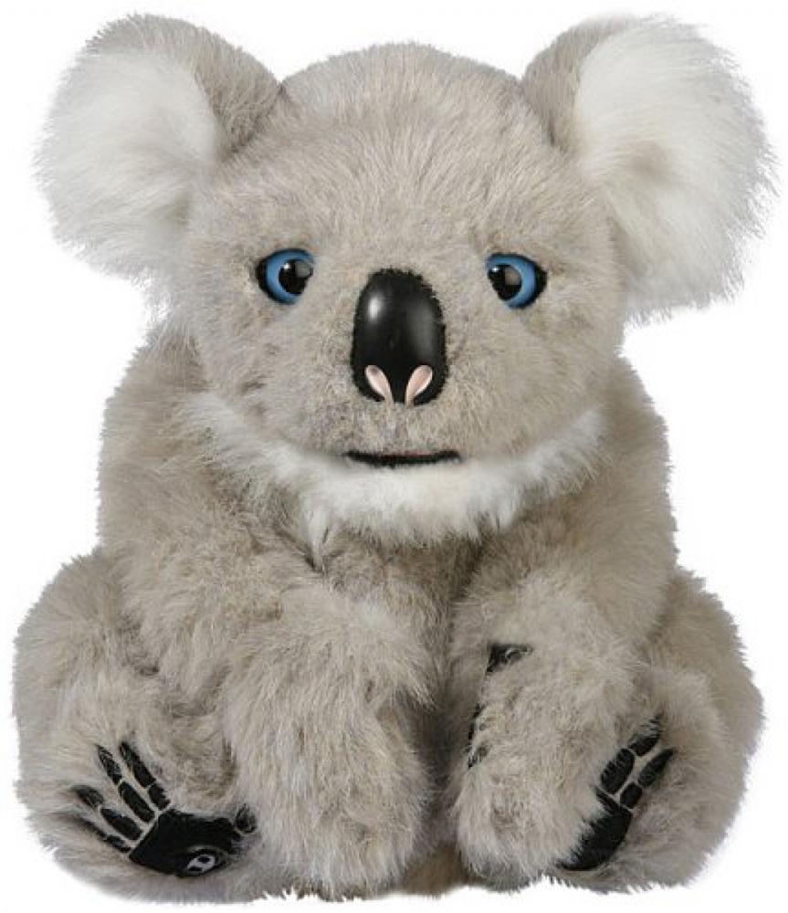 Alive Koala Joey