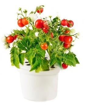 Click & Grow Томат - картридж для умного сада