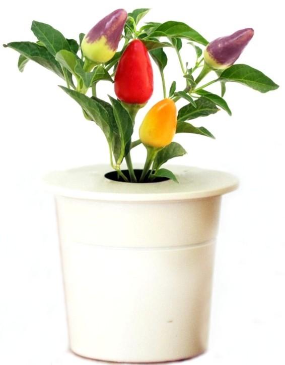 Click & Grow Перец - картридж для умного сада